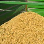 Cena soje ispod nivoa sa početka žetve