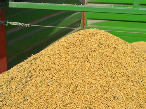 Rast cene soje na 35,98 din/kg bez PDV-a