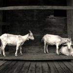 Kako organizovati negu koza