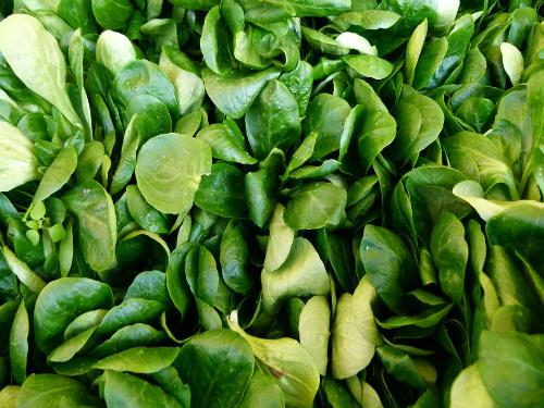 Matovilac jednostavan za uzgoj, a izvor vitamina i minerala
