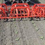 Rotaciona motika za uništavanje korova u kukuruzu