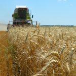 """""""Žetveni dan"""" ZSV održan u Novom Bečeju: Niži prinos pšenice, cena ne pokriva troškove"""