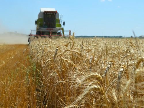 Robne rezerve kupuju pšenicu za 20 dinara