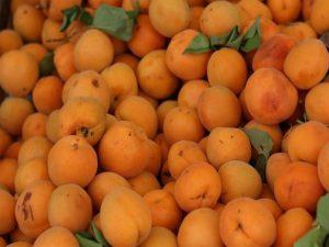 kajsija plodovi