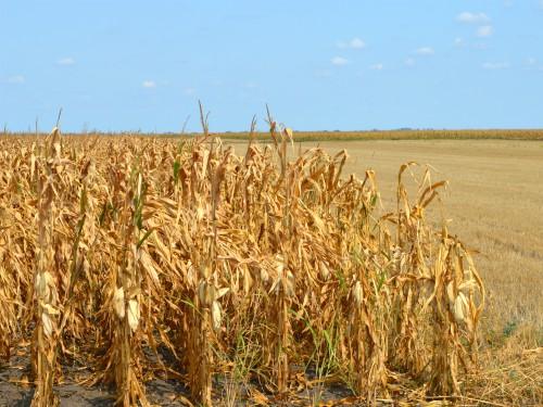 Mikrobiološkipreparat Bioplug za razgradnju biomase i kompostiranje