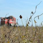 Saković: Očekuje se značajan pad prinosa soje