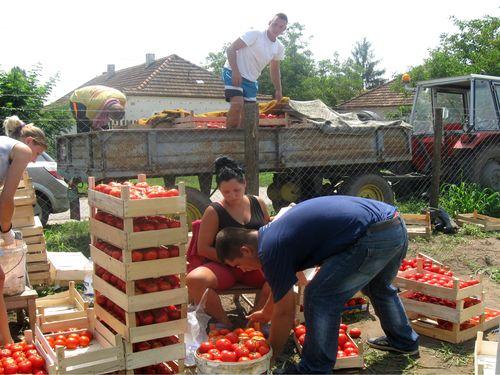 Read more about the article Konkurs za podršku mladim poljoprivrednicima