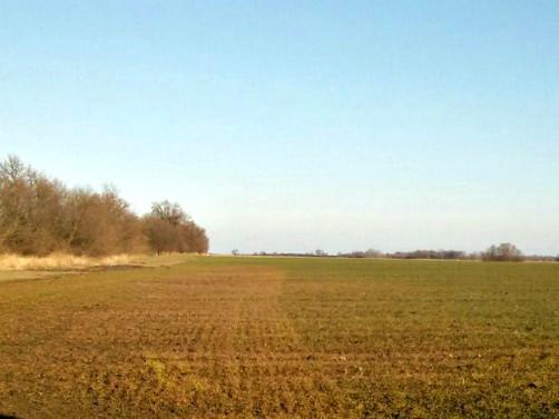 Crvenilo pšenice – uzroci i kako umanjiti štete