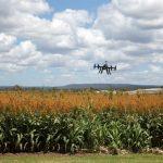 Otvoreni dani Digitalne farme počinju uskoro – prijave do 19. aprila