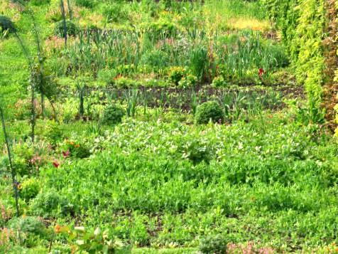 Zaštitni pojasevi u organskoj proizvodnji – potrebni i korisni