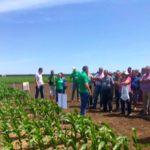 Poljoprivredni Institut Tamiš i kompanija Bayer organizovali Dan polja