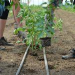 Novi zakonski okvir EU iz oblasti organske proizvodnje