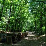 Sredstva za povećanje šumovitosti, šumske puteve i rasadničku proizvodnju