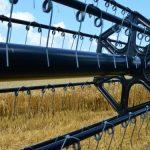 Žetvu pšenice koči vlaga zrna