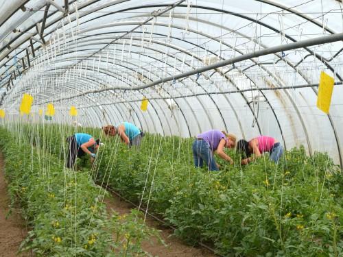 Konkurs za podsticaje za podršku mladim poljoprivrednicima