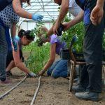 Bespovratna sredstva za mlade u ruralnim sredinama