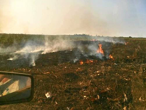 Umesto spaljivanja biljnih ostataka poštujmo plodored!