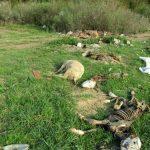Srbija zatrpana leševima životinja! Učestvujmo u rešavanju problema