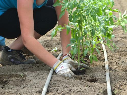 """Javni poziv za učešće na seminaru """"Uzgoj povrća u plasteniku"""""""