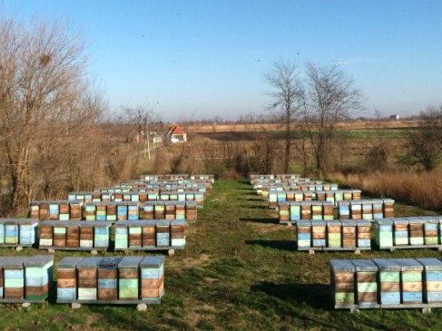 Utopljavanje pčelinjih zajednica – Kako to radi pčelar Janoš Balint