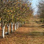 Nepesticidnim merama zaštitimo voćke dok miruju