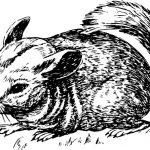 Zabranjeno držanje životinje isključivo radi proizvodnje krzna i kože