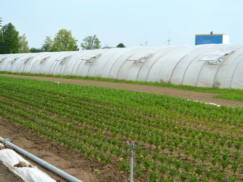 Dugoročni krediti za poljoprivredna gazdinstva