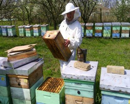 Rojidba i kako je sprečiti – iskustvo pčelara