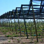 Zaštita jabuke – visok rizik od infekcija. Obezbediti zaštitu
