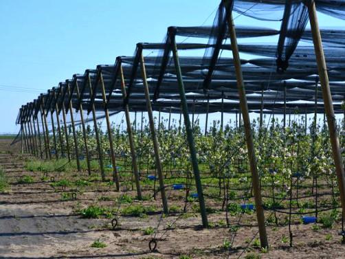 Više novca za podizanje voćnjaka, vinograda i hmeljarnika