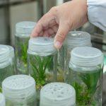Savetovanje o biotehnologiji na Agronomskom fakultetu u Čačku
