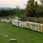 Pčelari od 15.4. i elektronski podnose zahtev za podsticaje po košnici