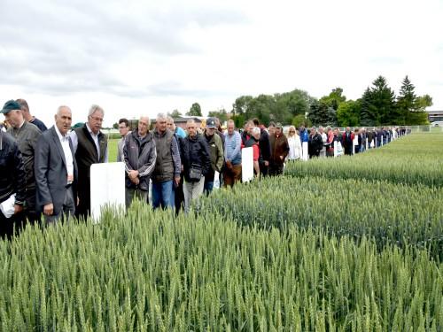 NS dan polja: Deklarisano seme nema alternativu