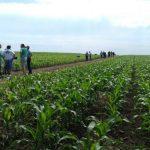 Druga godina integralnog suzbijanja korova u Banatskom Novom Selu