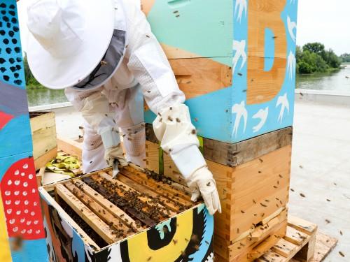 Postavljene košnice sa 72.000 pčela na krov agencije Kreative Unlimited