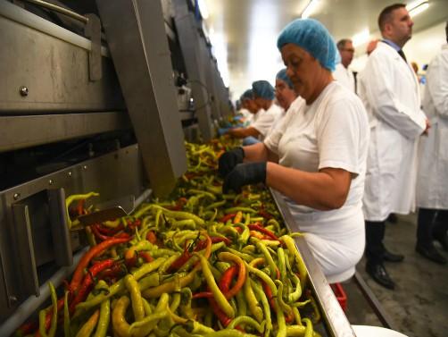 "Otvorena fabrika za preradu povrća nemačke kompanije ""Mamminger konserven – SRB"" vredna 4 miliona evra"