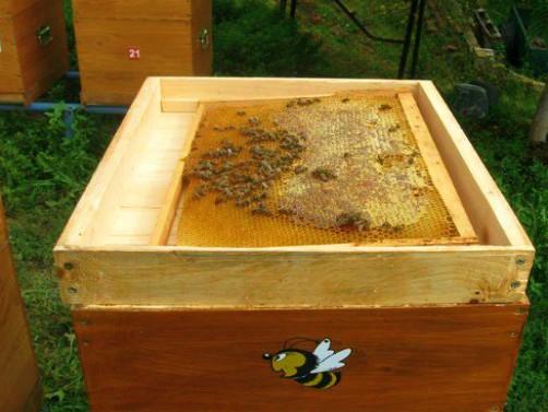Ako ste zakasnili sa uzimljavanjem pčela sada morate biti efikasni i brzi