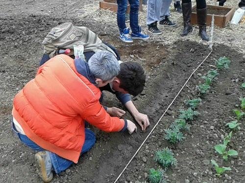Za čistije i zelenije škole u Vojvodini – Raspisan Javni poziv