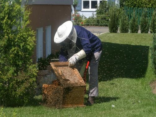 """Završena škola gradskog pčelarstva """"Bee connected"""""""
