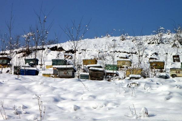 Život pčela u košnicama tokom zime. Kakvo je to čudo prirode?!