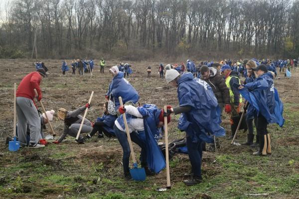 Masovno pošumljavanje Srbije. Posađeno više od 50 hiljada sadnica