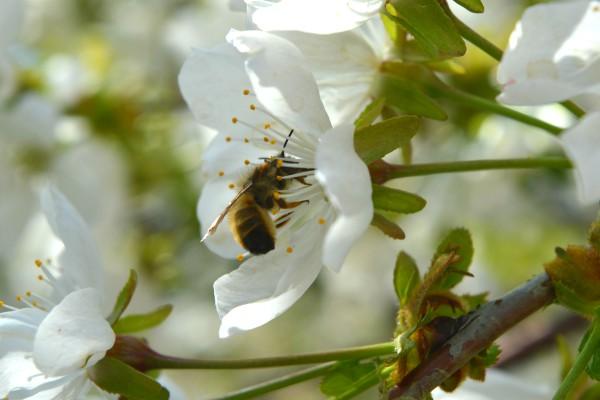 Deklaracija za zaštitu pčela Srbije potpisana u Novom Sadu
