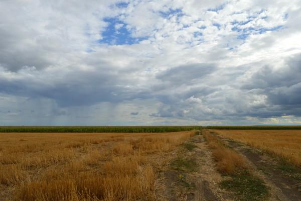 Rekordne površine državnog poljoprivrednog zemljišta u zakupu