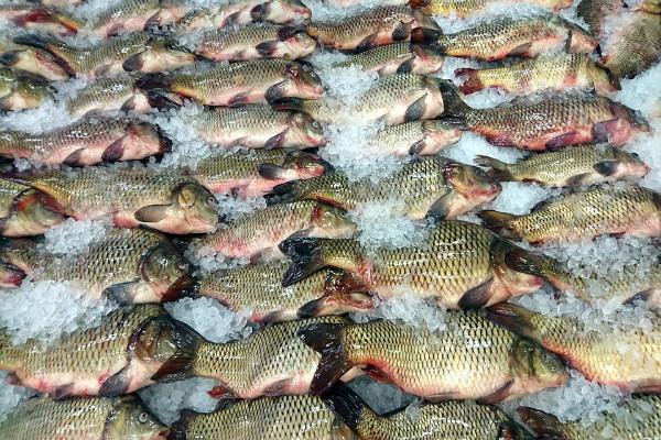 Riba u Srbiji sa oko 15.000 hektara. Neplodna zemlja pogodna za ribnjake