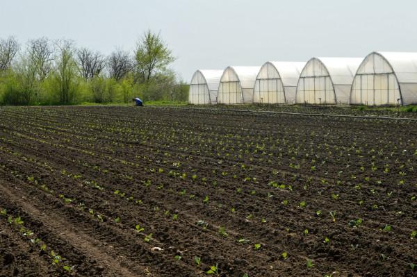 """Skup """"Savremena proizvodnja povrća"""" u Novom Sadu 14. februara"""