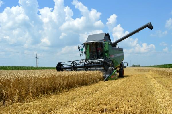 Cena koštanja pšenice za prinos od 4.500 kg/ha je 23,17 din/kg