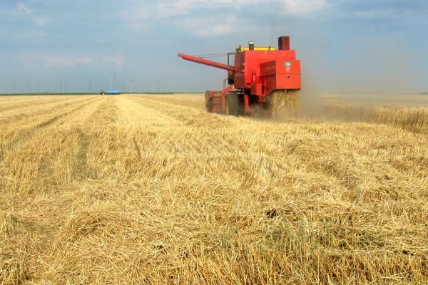 Pšenica 17,70 din/kg, uljana repica 340 €/t, soja 42,50 din/kg