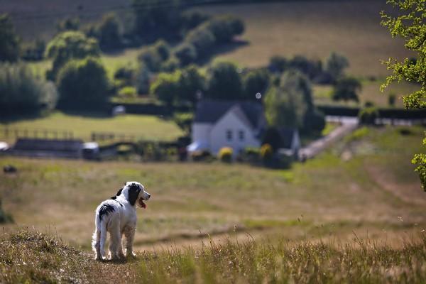 Počelo prijavljivanje za IPARD podsticaje za ruralni turizam