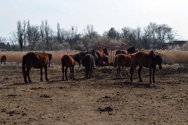 Selo u kom konji još uvek jure. Od lipicanera do brdskih konja